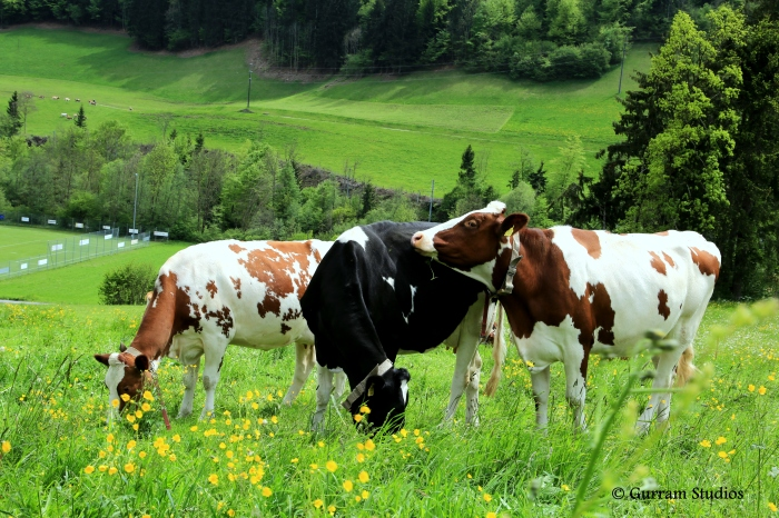Switzerland 139